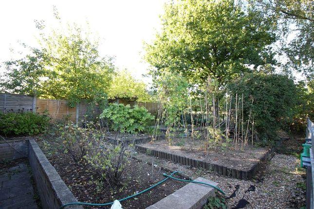 Allotment (In Garden)