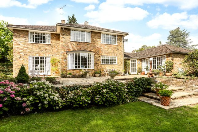 Thumbnail Detached house for sale in Pinecote Drive, Sunningdale, Berkshire