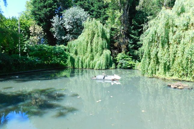 Clifton Duck Pond