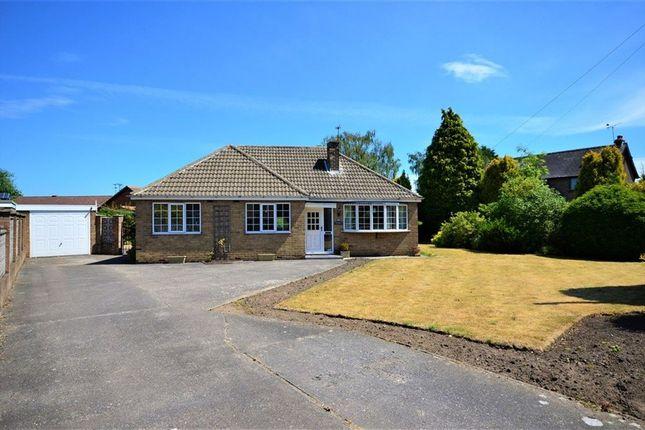 Thumbnail Bungalow to rent in Baffam Gardens, Brayton, Selby