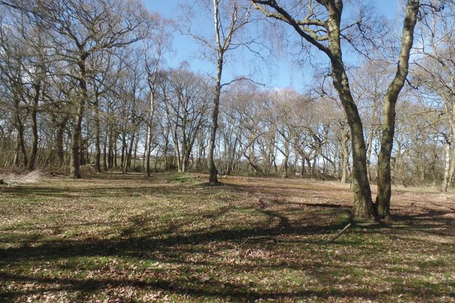 Thumbnail Land for sale in Shotton Colliery, Durham