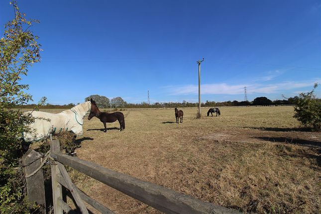 Thumbnail Equestrian property for sale in Lower Burnham Road, Latchingdon, Chelmsford