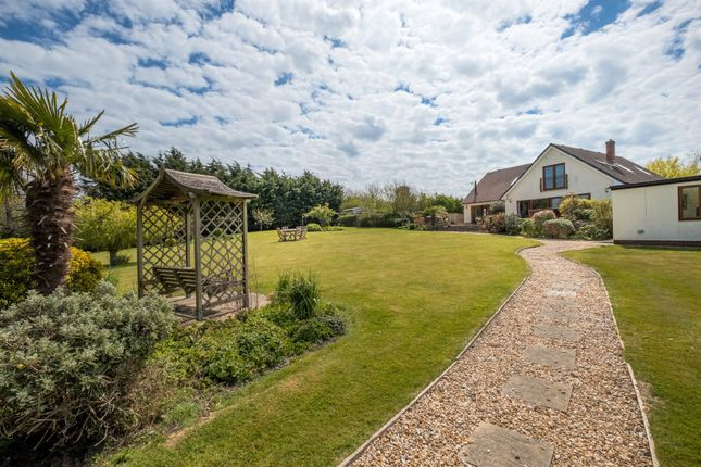 Thumbnail Detached house for sale in Main Road, Thorley, Yarmouth