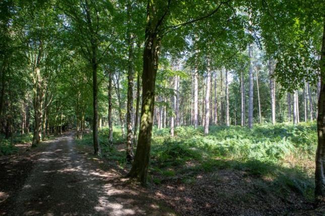 Alderley Park of Heatherley Wood Alderley Park, Nether Alderley, Cheshire SK10