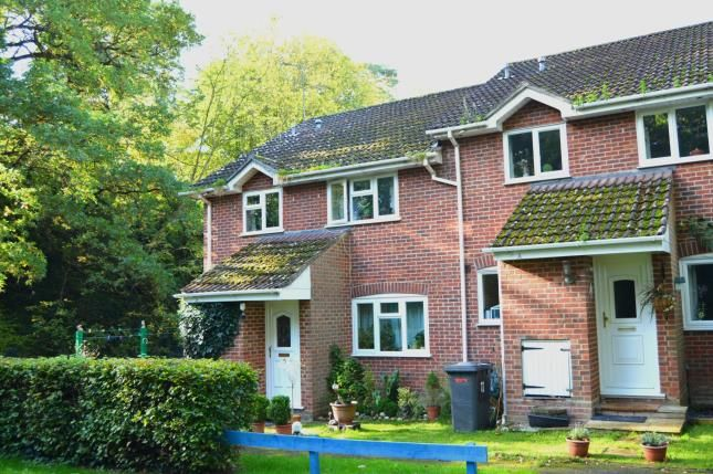 Thumbnail Semi-detached house for sale in Hook, Hampshire