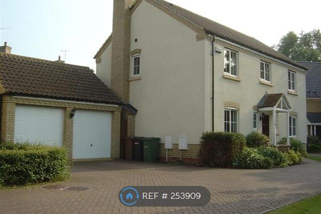 Thumbnail Detached house to rent in Longfield Gate, Peterborough
