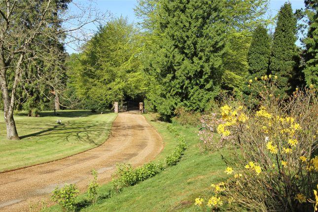 Picture No. 17 of Wheatsheaf Enclosure, Liphook, Hampshire GU30