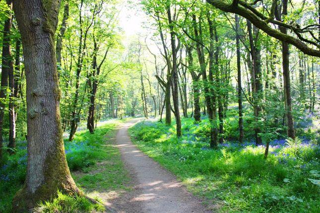 Bluebell Woods/ Bluebell Teas