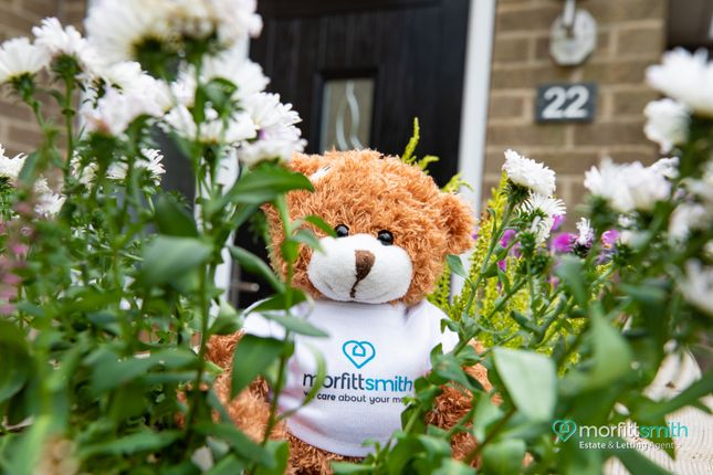 Smiffy Bear of Kirk Edge Drive, Worrall, - Viewing Essential S35