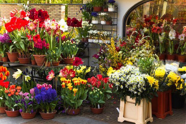 Thumbnail Retail premises for sale in Florist HG1, North Yorkshire