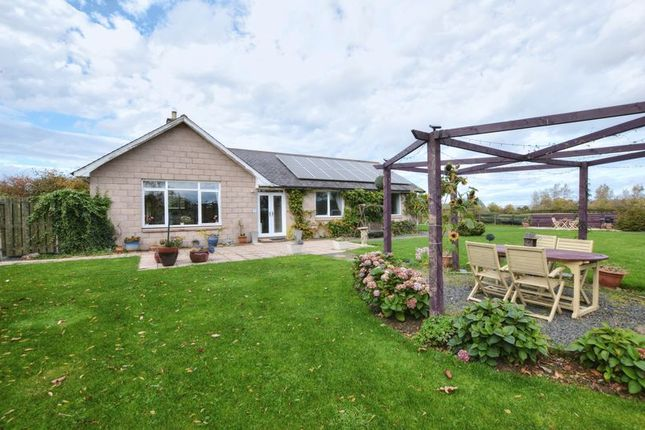 Thumbnail Detached house for sale in South Road, Belford