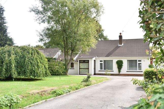 Thumbnail Detached bungalow to rent in Coleford Road, Tutshill, Chepstow