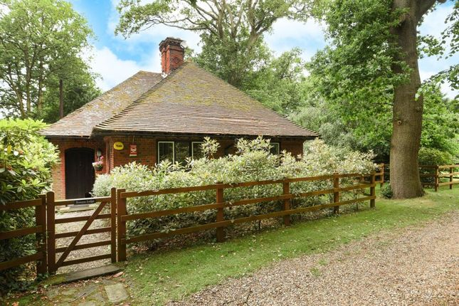 Thumbnail Detached bungalow to rent in Forest Road, Winkfield Row
