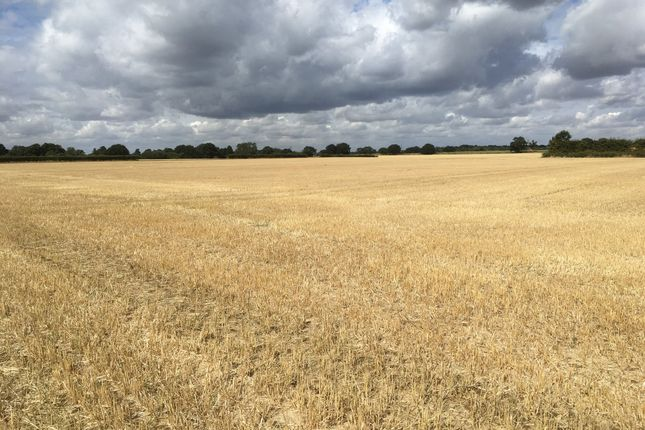 Thumbnail Farm for sale in Hall Road, Great Bromley, Colchester