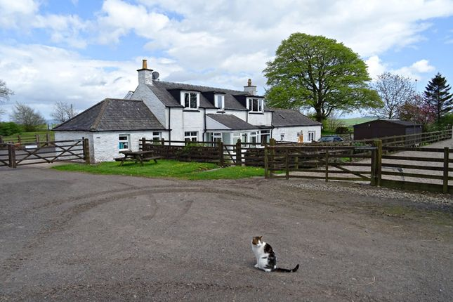 animals free to good home dumfries and galloway