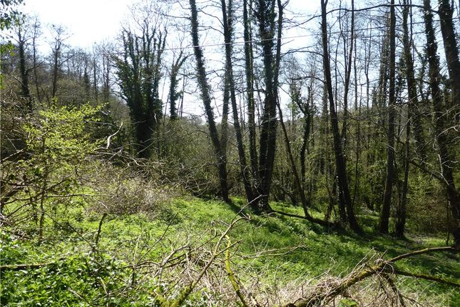 Thumbnail Land for sale in Lower Ridge, Chardstock, Axminster, East Devon
