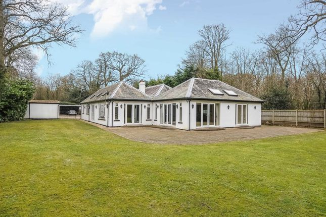 Thumbnail Detached bungalow to rent in London Road, Windlesham