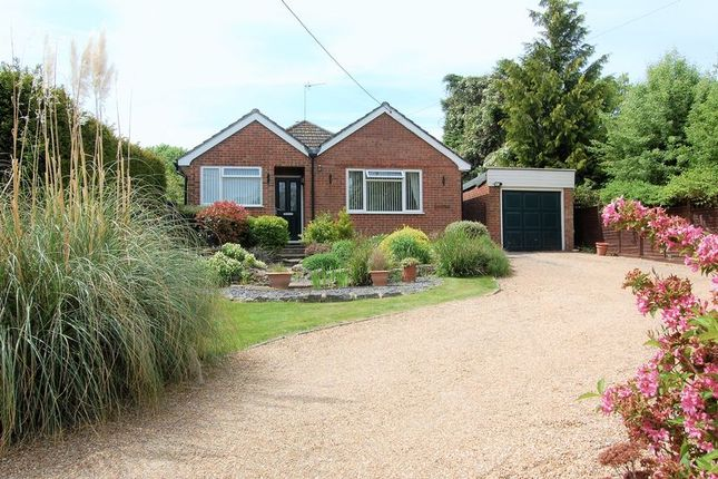 Thumbnail Detached bungalow to rent in Petersfield Road, Alresford