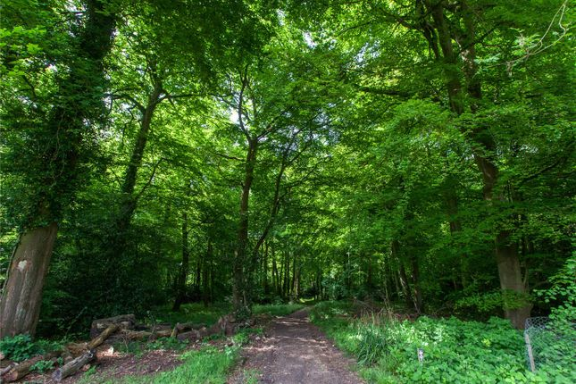 Nearby Woodland of Bix, Henley-On-Thames, Oxfordshire RG9