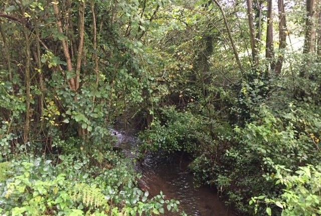 Img_2891 of North Buckland, Braunton EX33