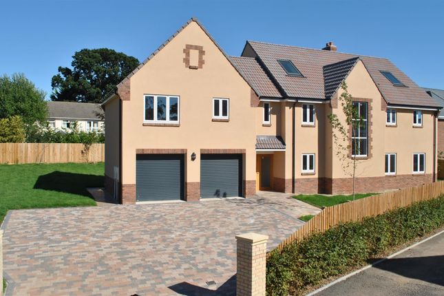 Thumbnail Detached house for sale in Sherlands Heights, Taunton