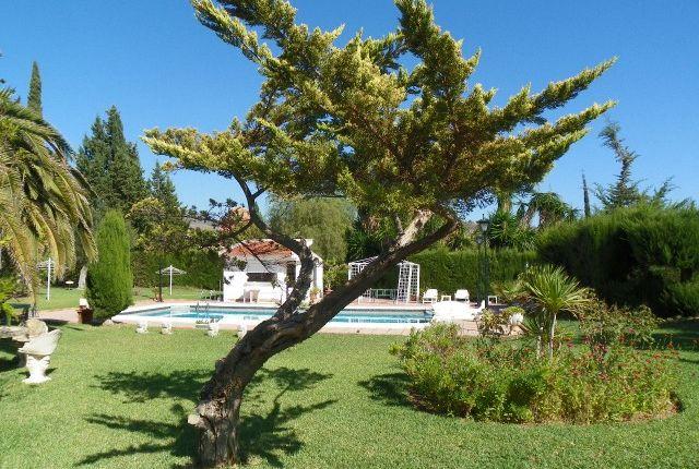 Garden And Pool of Spain, Málaga, Málaga, Puerto De La Torre