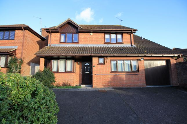 Thumbnail Detached house to rent in Thistle Down, Colchester, Essex
