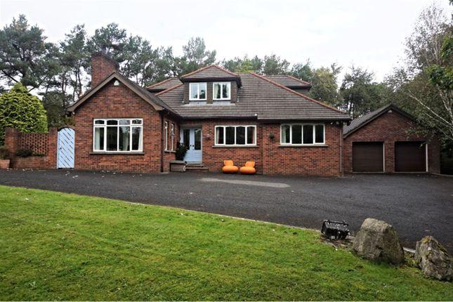 Thumbnail Detached house for sale in Dromore Road, Hillsborough