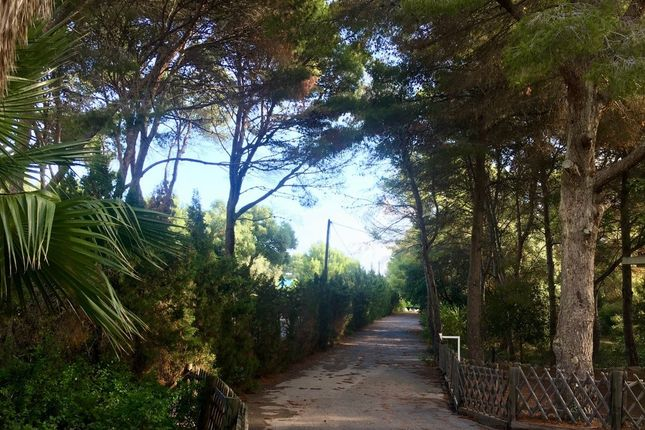 Thumbnail Land for sale in Dénia, Alicante, Spain