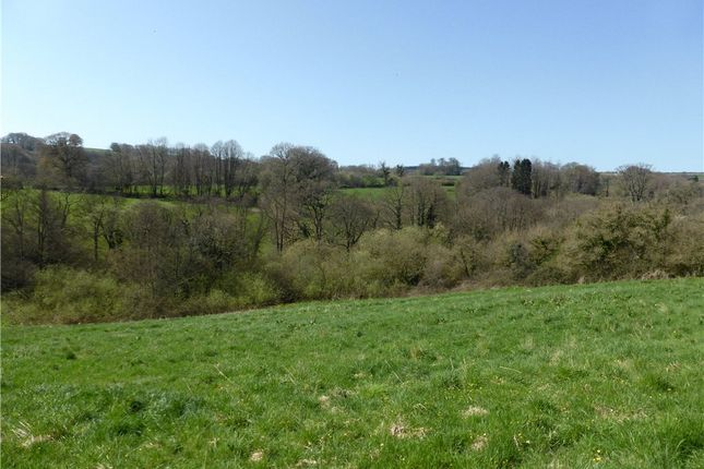 Pasture Paddock of Lower Ridge, Chardstock, Axminster, East Devon TA20
