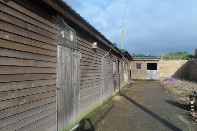 Thumbnail Equestrian property to rent in Mount Street, Battle