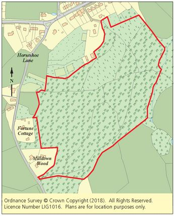 Thumbnail Land for sale in Milldown Wood, Horseshoe Lane, Beckley, Rye, East Sussex