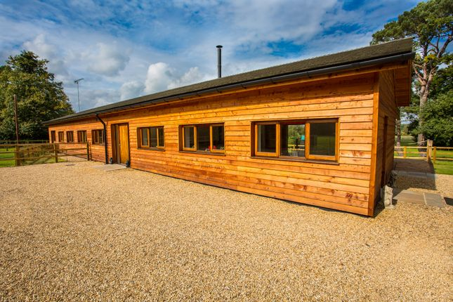 Thumbnail Detached house for sale in Norfolk, Northwold, Near Thetford Lifestyle, Equestrian, Business