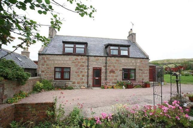 Thumbnail Semi-detached house to rent in Hill Street, Cruden Bay