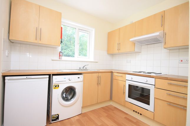 Thumbnail Maisonette to rent in Springfield Road, Brighton