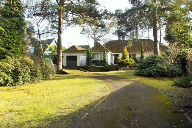 Thumbnail Detached bungalow to rent in Curley Hill Road, Lightwater, Surrey