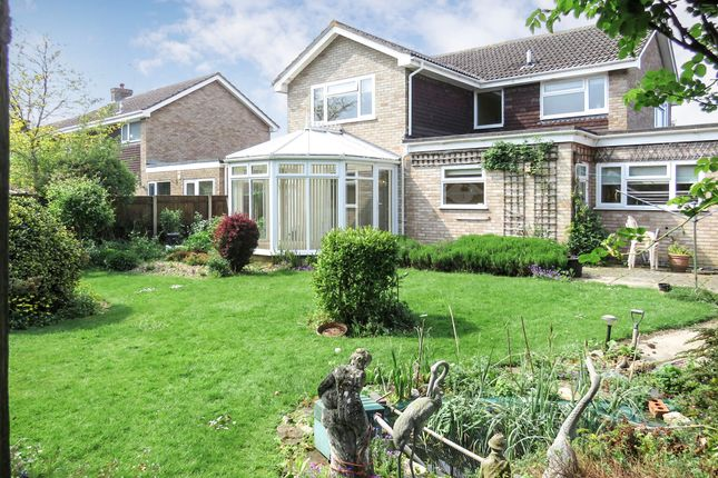 Thumbnail Detached house for sale in Hall Hills, Roydon, Diss