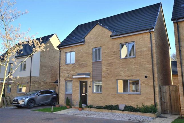 Thumbnail Detached house for sale in Brimstone Drive, Stevenage, Herts