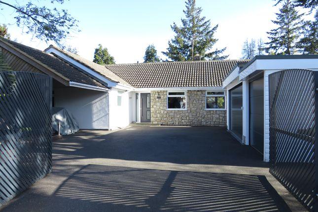Thumbnail Detached bungalow for sale in Cedar Avenue, St. Leonards, Ringwood