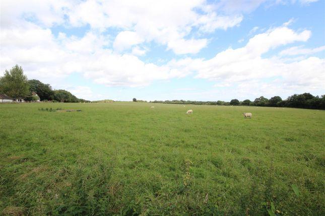 Img_5641 of Thunders Hill, Golden Cross, Hailsham BN27