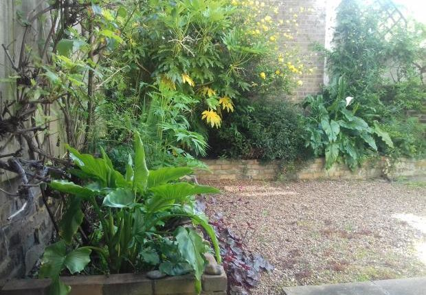 Garden of Murray Street, Camden Town NW1