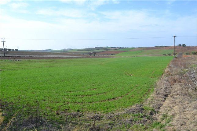 Thumbnail Land for sale in Nea Fokaia, Chalkidiki, Gr