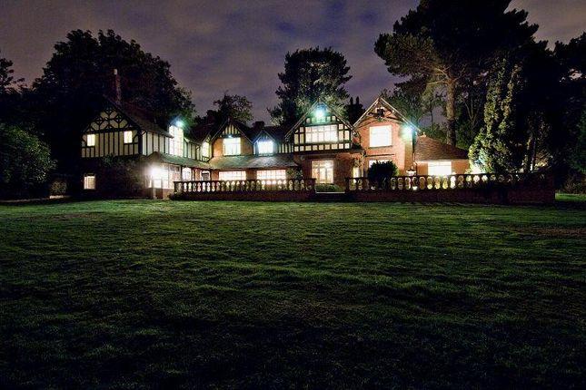 Rear View: At Night