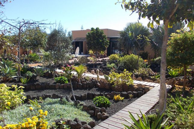 Nice Garden Area of Drago 9, Corralejo, Fuerteventura, Canary Islands, Spain
