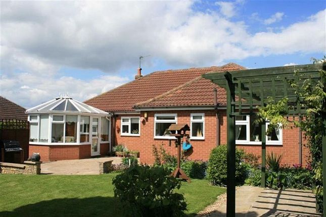 Thumbnail Detached bungalow to rent in Lodge Lane, Upton