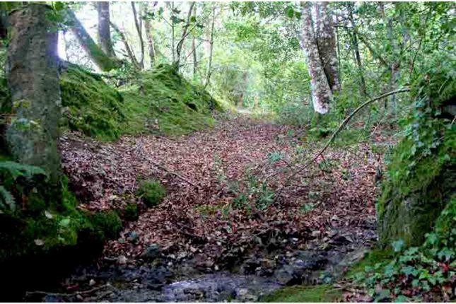 Woodland of Tregatillian, St. Columb TR9