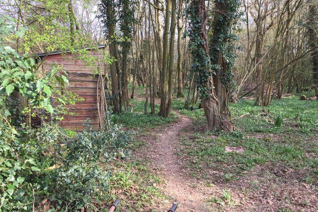 Woods1 of Hempstead Lane, Hailsham BN27