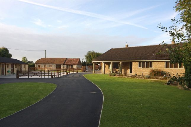 Thumbnail Equestrian property for sale in Pen Selwood, Wincanton, Somerset