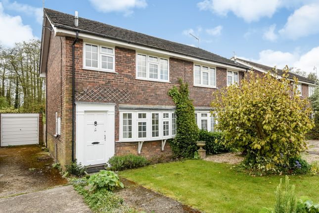 Thumbnail Semi-detached house to rent in Ockfields, Milford, Godalming