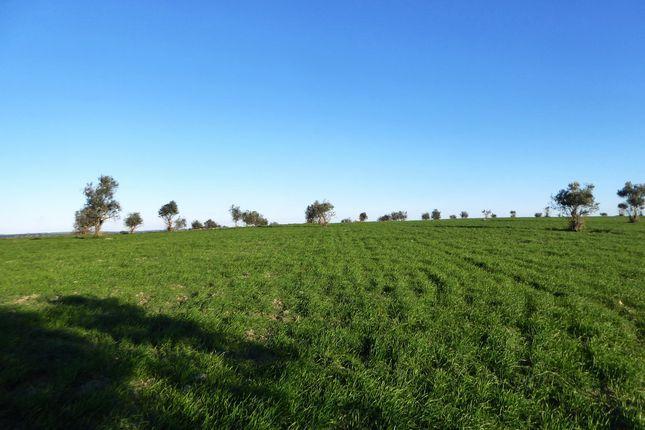 Thumbnail Farm for sale in L350, 57 Ha Dryland Farming Land In Alentejo, Portugal, Portugal